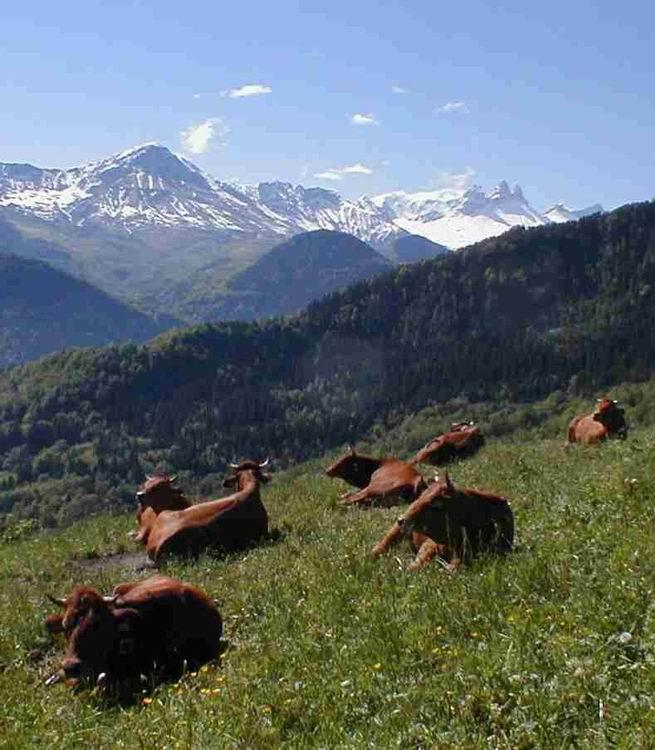 Les Tarines au repos © Jarrier
