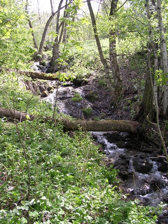 Entretien des rivières ©